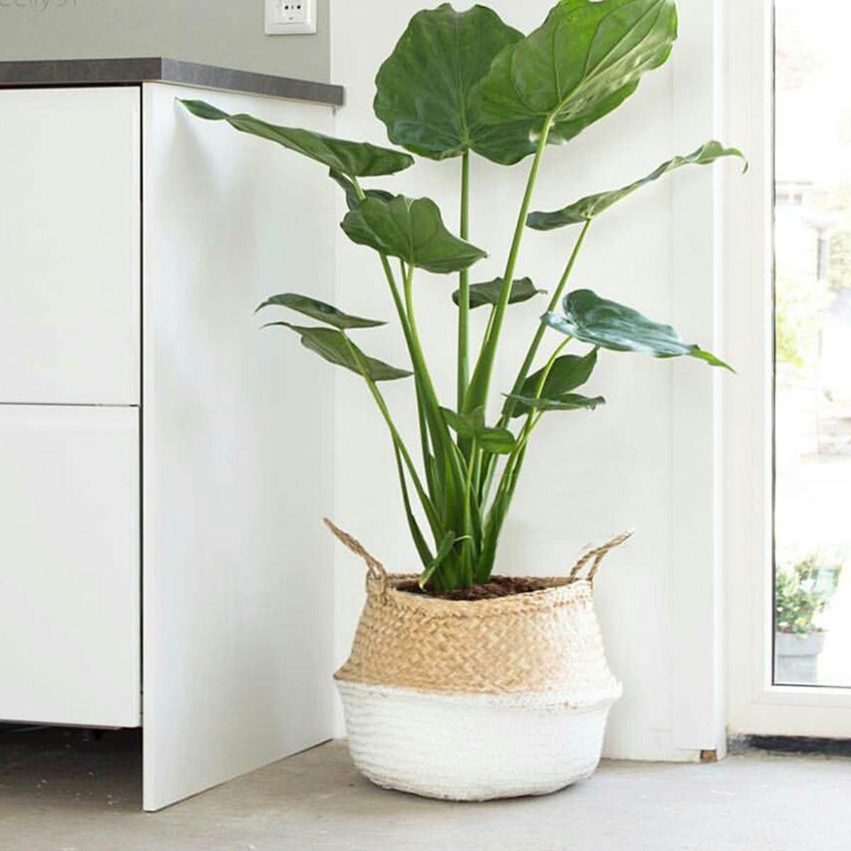 1Pcs Seagrass Belly Basket Storage Plant Pot Foldable Laundry Nursery Room Decor # White - intl