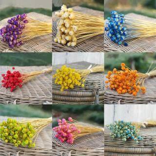 Bó hoa khô tự nhiên mini dùng trang trí nhà cửa studio chụp ảnh nghệ thuật giá tốt - INTL thumbnail