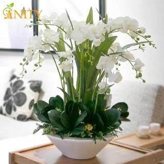 ANITY 200 Hạt Bộ Hạt Phong Lan Phalaenopsis, 22 Loại Hỗn Hợp Cây Bonsai Trồng Trong Chậu Vườn Ban Công Hạt Giống Hoa thumbnail