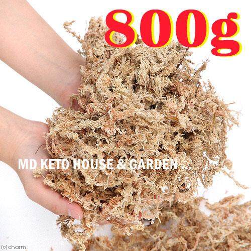 A++ 800g Top Quality Golden Chile Chilean Sphagnum Moss for Bonsai, Cattleya phalaenopsis Dendrobium Orchid