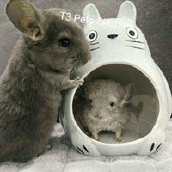 Nhà sứ Toroto cho hamster