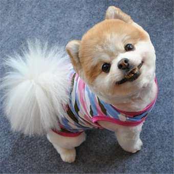 KENDETY น่ารักสุนัขลูกสุนัขสัตว์เลี้ยงฤดูร้อนเสื้อกั๊กลายพรางเสื้อสุนัขขนาดเล็กเสื้อผ้าสัตว์เลี้ยง Download-