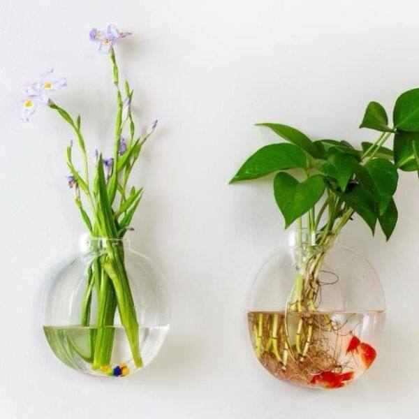 ●✒ Glass vase hydroponic flower arranging the sitting room the bedroom of water for the family with fish indoor transparent special hanging wall act the role ofing wall flower pot