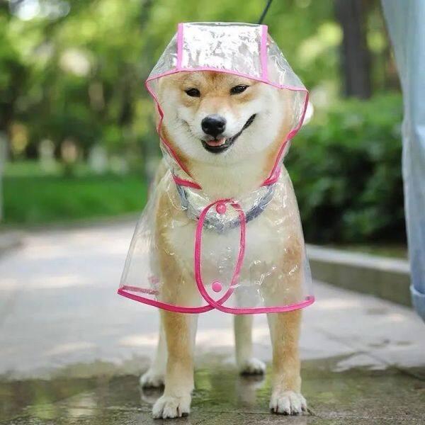 ▪℗ Quần Áo Cho Chó Trong Suốt Áo Pon-sô Chống Thấm Nước Lớn Quần Áo Thú Cưng Corgi Schnauzer Áo Mưa Cho Chó Đồ Dùng Đi Mưa Đồ Dùng Cho Chó