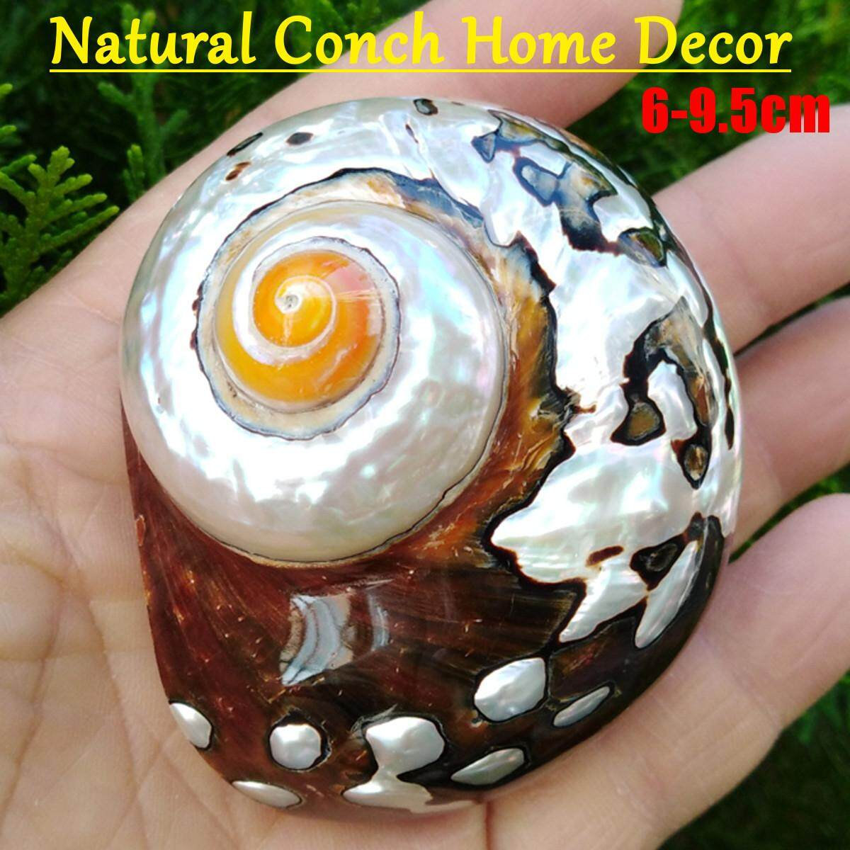 6-9.5cm Natural African Turban Sea Shell Coral Conch Snail Home Fish Tank Decor
