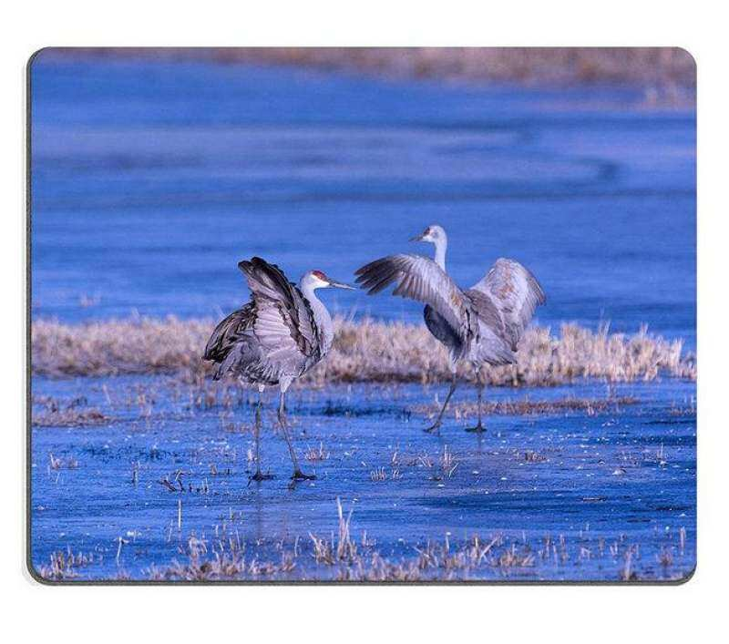 Hình ảnh Sold by ELong station Mouse Pad Gaming Mouse pad Natural Rubber mouse mat sandhill cranes dancing in water Set of Natural Rubber Material M0A13673 - intl