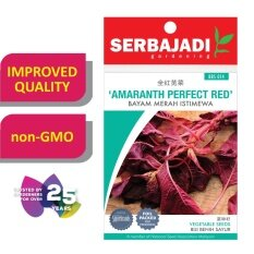 Serbajadi Seeds Amaranth Perfect Red - Bayam Merah Istimewa ( BBS014 ) (+/- 80 Seeds)