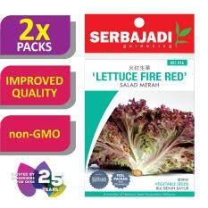 [2 Packs] Serbajadi Seeds Lettuce Fire Red ( BBS046 ) (+/- 250 Seeds)