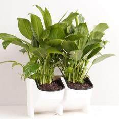 2-Pocket Stackable Wall Hanging Planter Flower Pot Garden Seedling Grow Basket