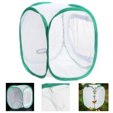 30x30x30cm Praying Mantis Stick Net Insect Leaf Butterfly Chameleon Pop Up Cage