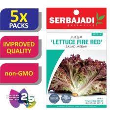 [5 Packs] Serbajadi Seeds Lettuce Fire Red ( BBS046 ) (+/- 250 Seeds)