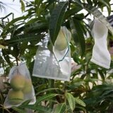 Garden Plant Fruit Protect Drawstring Net Bags Mesh Against Insect Bird 25x15cm