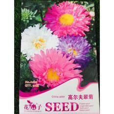 FLOWER GODDESS A100 CHINA ASTER 50SEEDS
