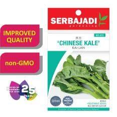 Serbajadi Seeds Chinese Kale - Kai Lan ( BBS023 ) (+/- 65 Seeds)