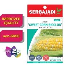 Serbajadi Seeds F1 Hybrid Sweet Corn Bicolor - Jagung ( BBS030 ) (+/- 10 Seeds)