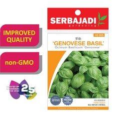 Serbajadi Seeds Genovese Basil HS005 (Ocimum Basilicum Genovese)