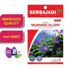 Serbajadi Seeds Morning - Glory FS013