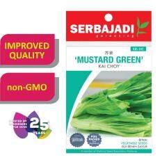 Serbajadi Seeds Mustard Green - Kai Choy ( BBS042 ) (+/- 100 Seeds)