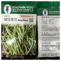 Snap Bean 矮性菜豆