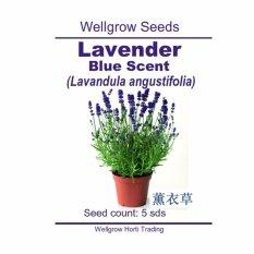 WHT Wellgrow Seeds #23841998 Lavandula Blue Scent Early Primed (5 SEEDS)