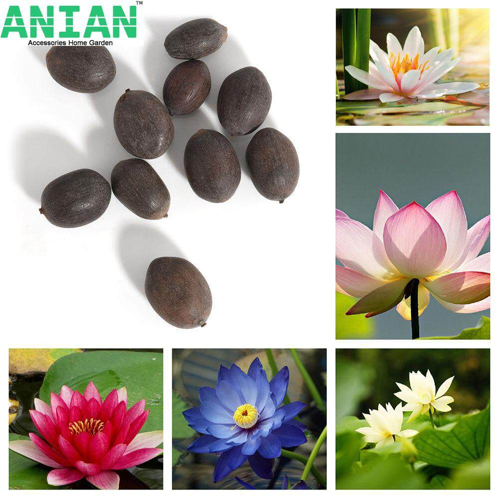 ANIAN 50Pcs Bonsai Lotus Water Lily Flower Bowl Pond Fresh Seeds Perfume Blue Lotus w8