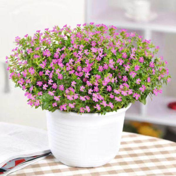 50pcs/Bag Mixed Color The Sky Star Flower Seeds Bonsai Babysbreath Potted Plants Garden Decoration Gypsophila Seeds