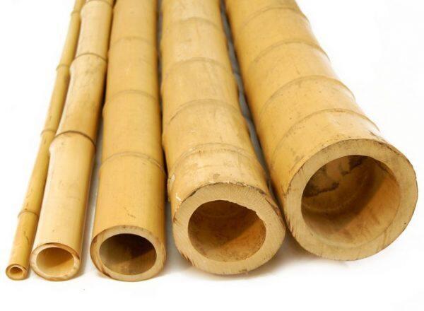 2 in 50mm Bamboo Poles Semantan Natural Chemical-free