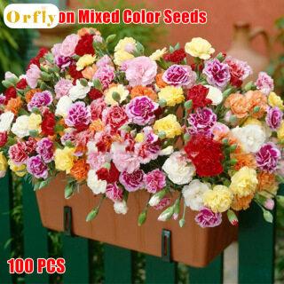 Orfly 100 Hạt Giống Hoa Cẩm Chướng, Hạt Cẩm Chướng Hỗn Hợp Màu thumbnail