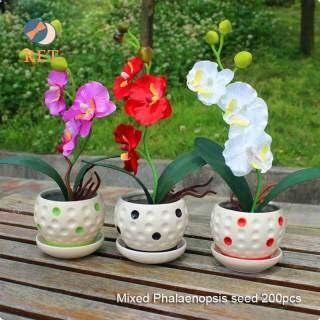 RET 200 Hạt Bộ Hạt Phong Lan Phalaenopsis, 22 Loại Hỗn Hợp Cây Bonsai Trồng Trong Chậu Vườn Ban Công Hạt Giống Hoa thumbnail