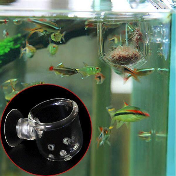 Thực Hành Mới Nhất Cho Bể Cá Hồ Cá 36X36Cm Kiểu Lỗ Cho Cá Ăn Ốc Sên Bẫy Hành Tinh Leech Bắt Cốc Cho Ăn Thủy Tinh