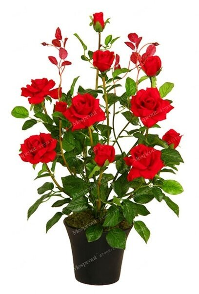 200pcs Rose Pleasant-Smelling Fragrant Bonsai Flower Seed rose tree plant Balcony&Yard potted
