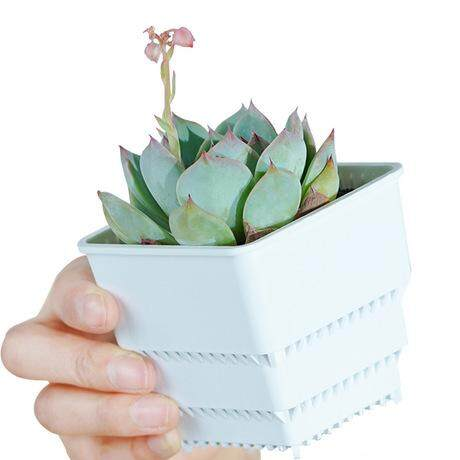 Set of 3 Succulent Mesh Pot Cactus MeshPot 10cm Square Succulent Pots Flower Planter Cactus Pot Plastic Square Pot With Holes Excellent Drainage, Good Air Movement, Prevent Rotting