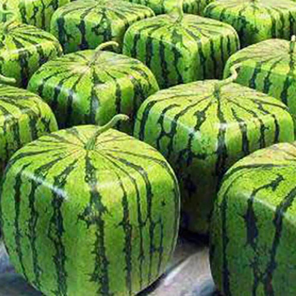 50Pcs Seeds Rare Geometric Square Watermelons Seeds Farm Garden Fruit