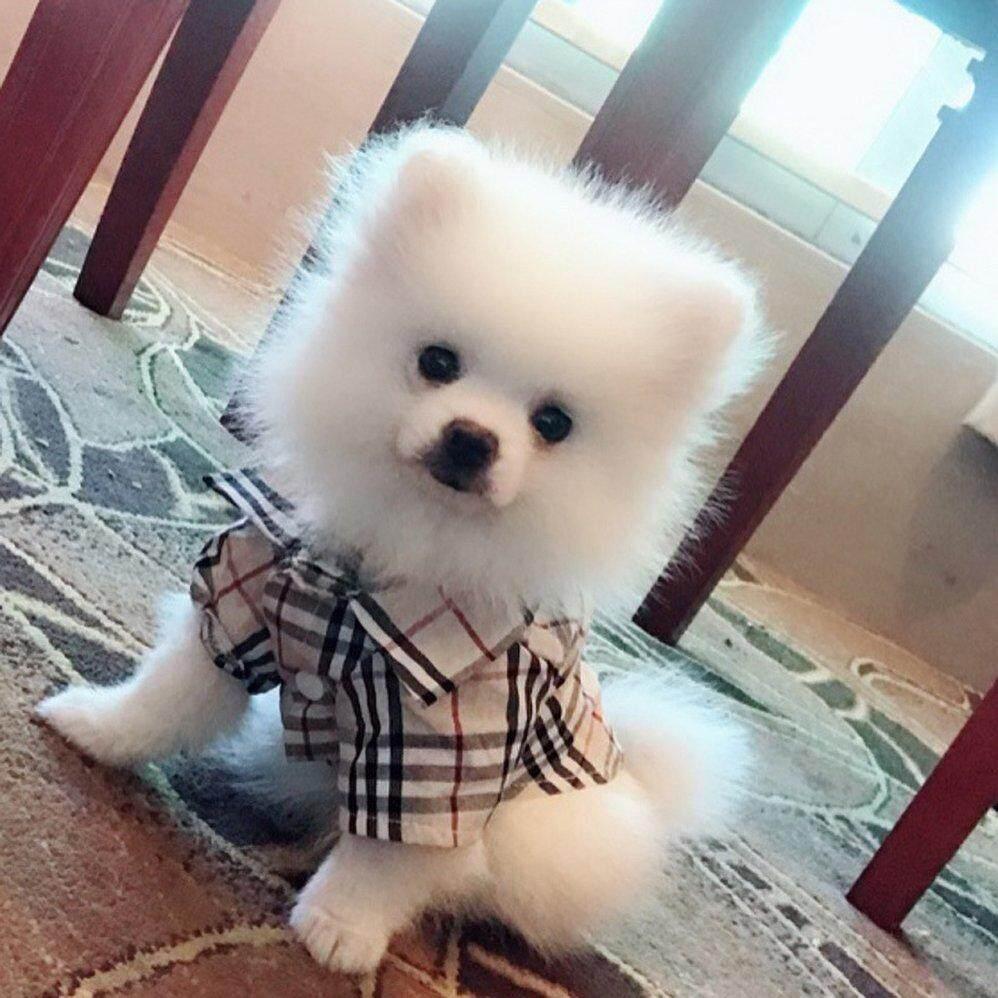 สบายสัตว์เลี้ยงสุนัขเสื้อผ้าสำหรับสุนัขเสื้อยืด Lattice พิมพ์ผ้าฝ้ายสัตว์เลี้ยงสุนัขผ้าสำหรับหมาสัตว์เลี้ยงเสื้อผ้าเครื่องแต่งกาย By Blueringcat.