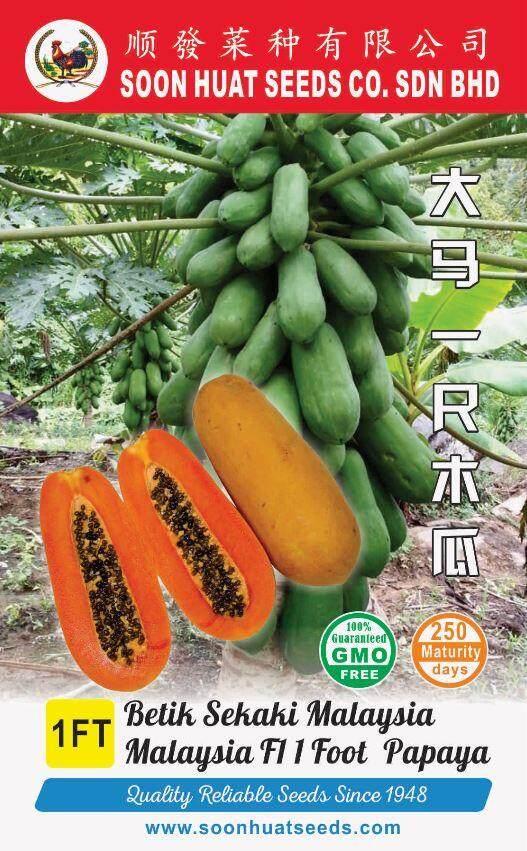Papaya Seeds Malaysia Buah Betik Sekaki Malaysia 1 Foot Papaya Seeds By Soon Huat Seeds.