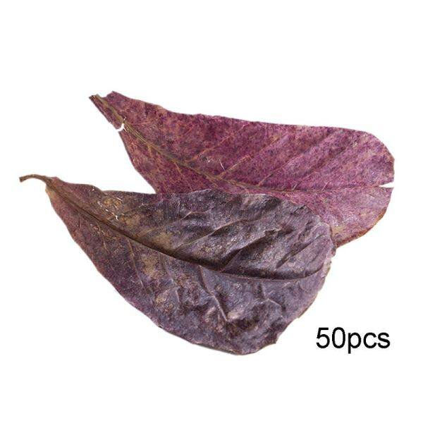 50 chiếc lá ô liu cải thiện chất lượng nước giá trị pH giảm lá cho bể cá