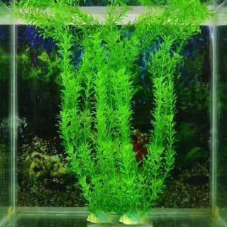 Cây cảnh xanh trang trí bể cá Huanhuang - INTL thumbnail