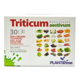 Triticum Aestivum Wheatgrass 30's