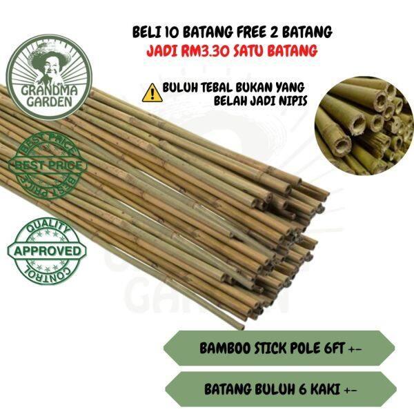 👵 Batang Buluh 6 Kaki | 180cm Bamboo Stick Pole (Sesuai Untuk Pagar , Pancang Pokok) - GRANDMAGARDEN