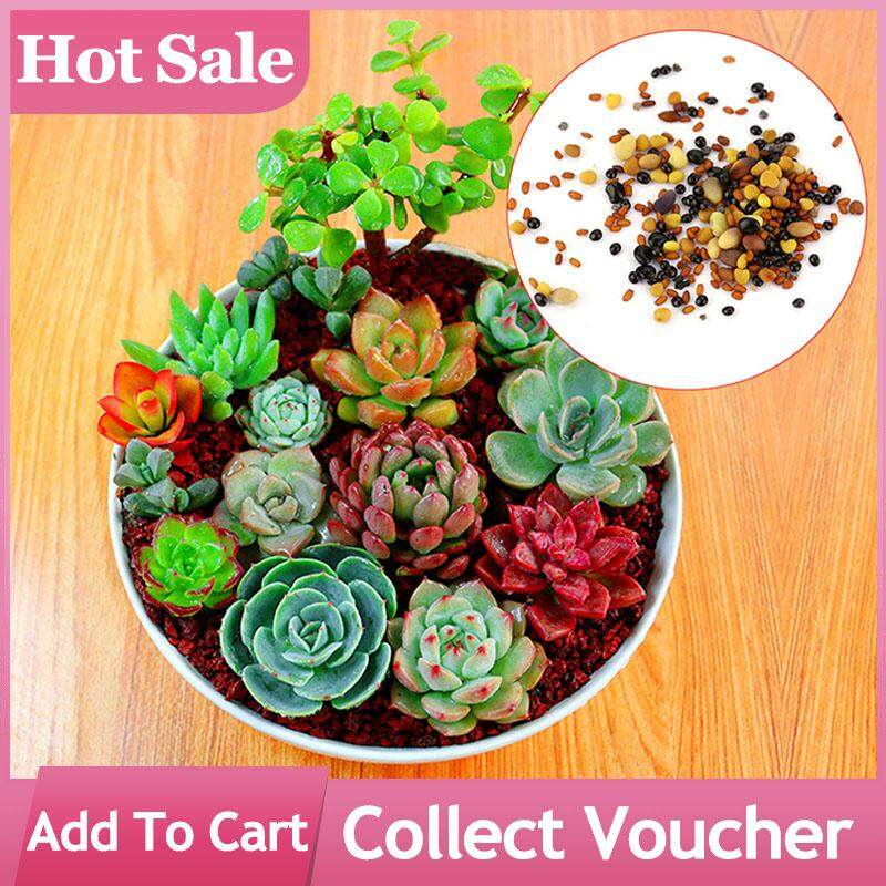 5 Packs/Set Mix Succulent Seeds Mini Flower Seed Bonsai Plants for Home Garden Decoration