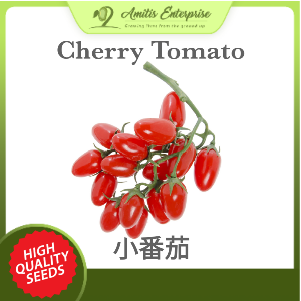 NEW 30 seeds of Cherry Tomato 樱桃番茄 F1 Hybrid and Premium Seeds Suitable for Lowland Growing