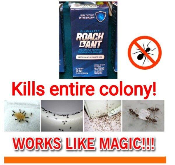 Umpan lipas dan Semut. Pembasmi Lipas dan Semut RoachBuster 🐜🐜