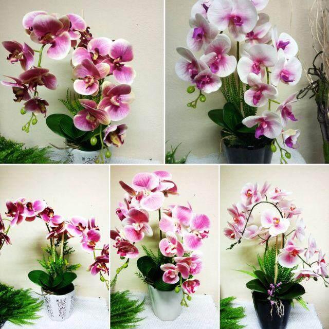 500 Gambar Bunga Orked Terbaru Infobaru