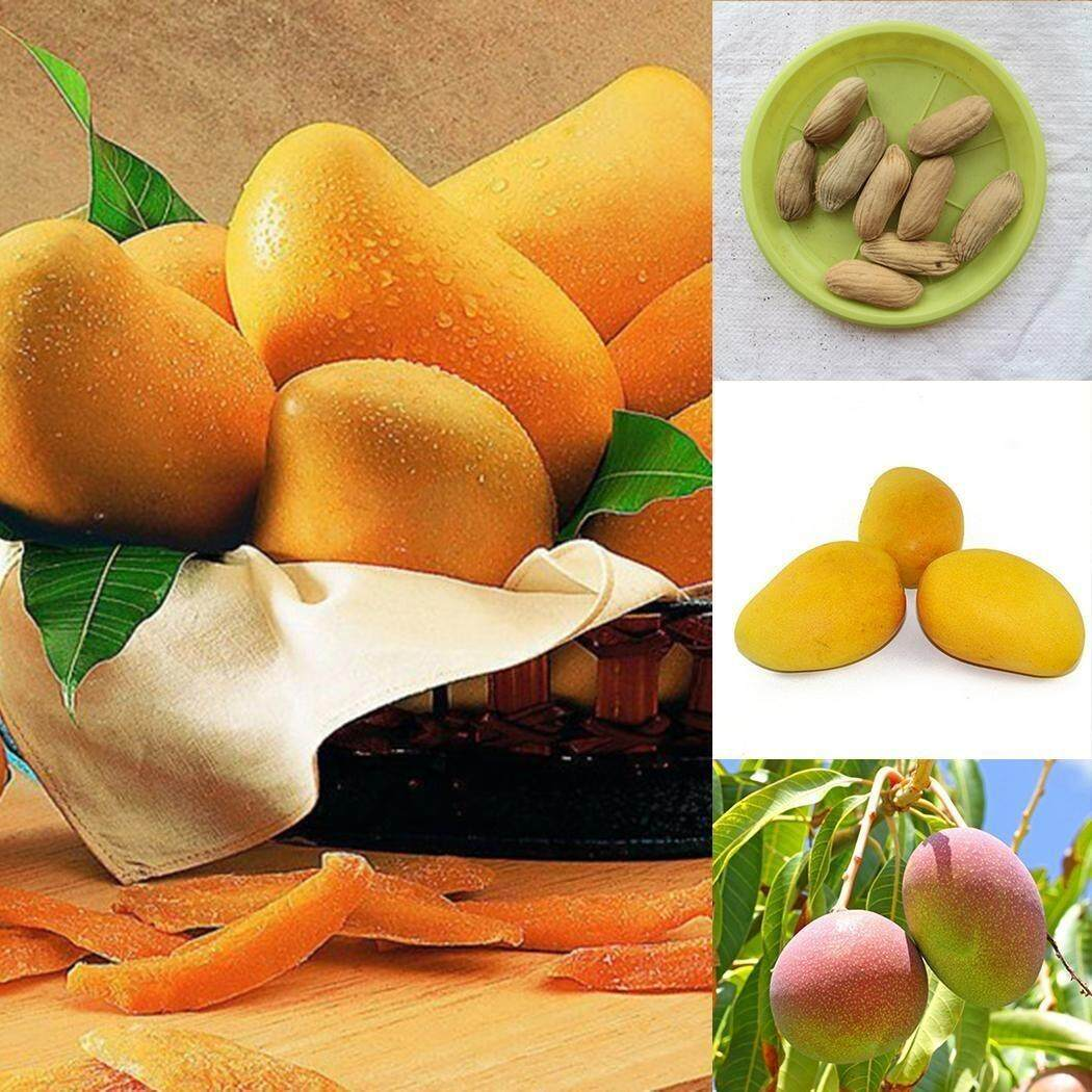 Mango Seeds Organic Mango Tree Seeds Home Garden Planting Fruit Seeds