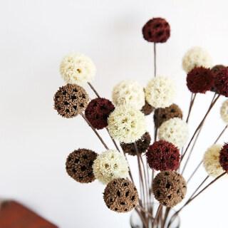 5 Bông Hoa Khô Bó Hoa Khô Trang Trí Nhà Cửa Tự Nhiên Phụ Kiện Thủ Công Tự Làm Trái Cây Khô Trang Trí Mộc Mạc Đồ Trang Trí Đám Cưới thumbnail