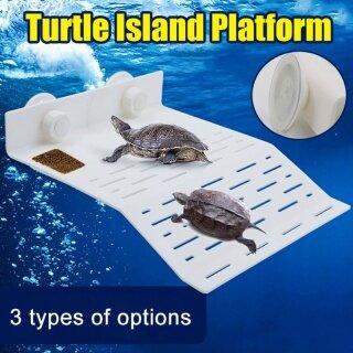 Bể Cá Bể Cá Rùa Nền Tảng Rùa Cạn Rùa Nước Rùa Cạn Rùa Nước Rùa Rùa Hộp Rùa Cạn Rùa Nước thumbnail