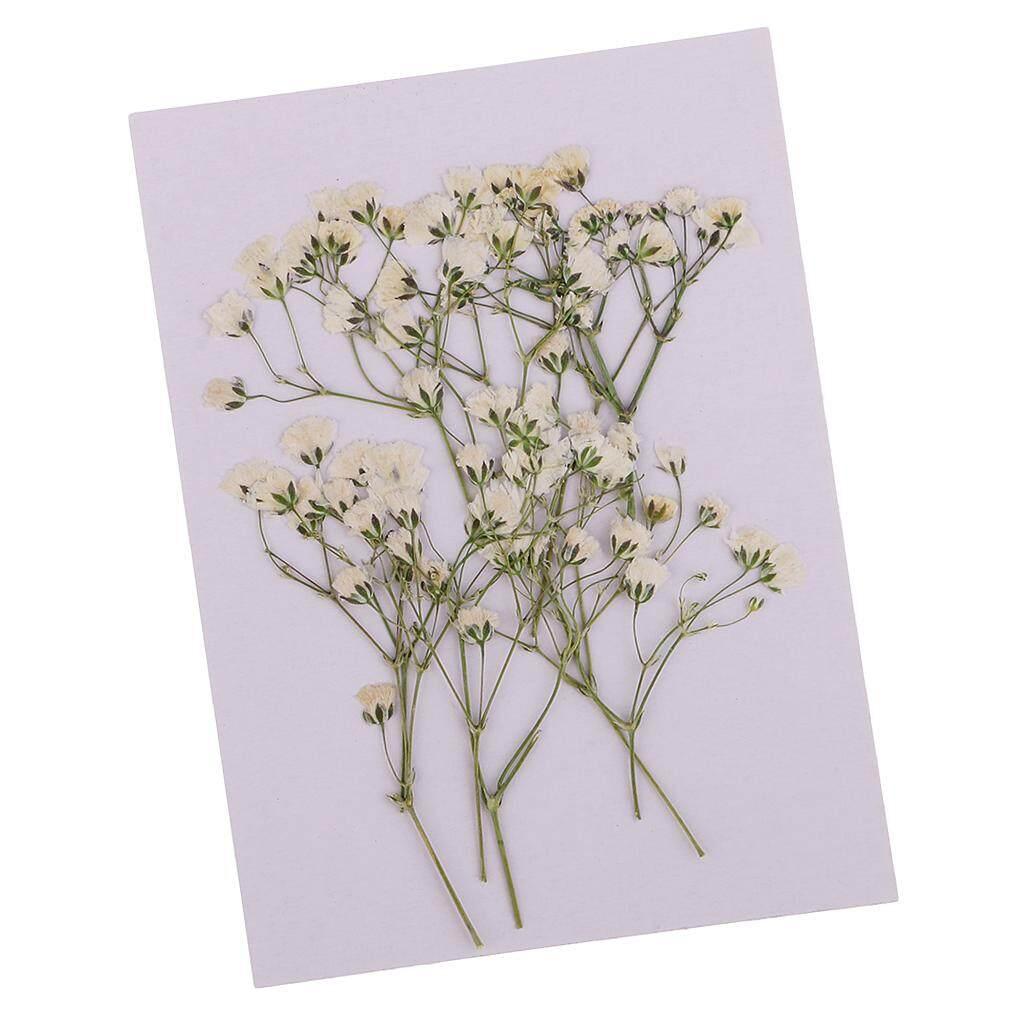prettyia 5pcs Pressed Dried Linden Leaves Bodhi Leaf Flowers DIY Scrapbook