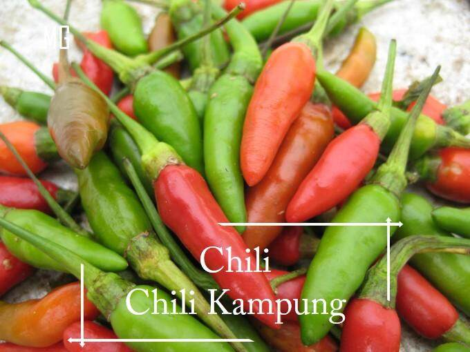 *Special* Organic Chili Kampung seeds - 20 seed