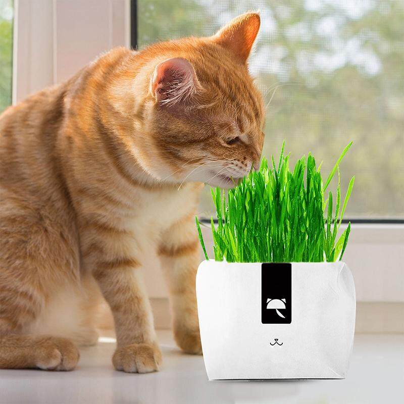 WithRitty Hydroponic Soilless Organic Natural Cat Grass kit