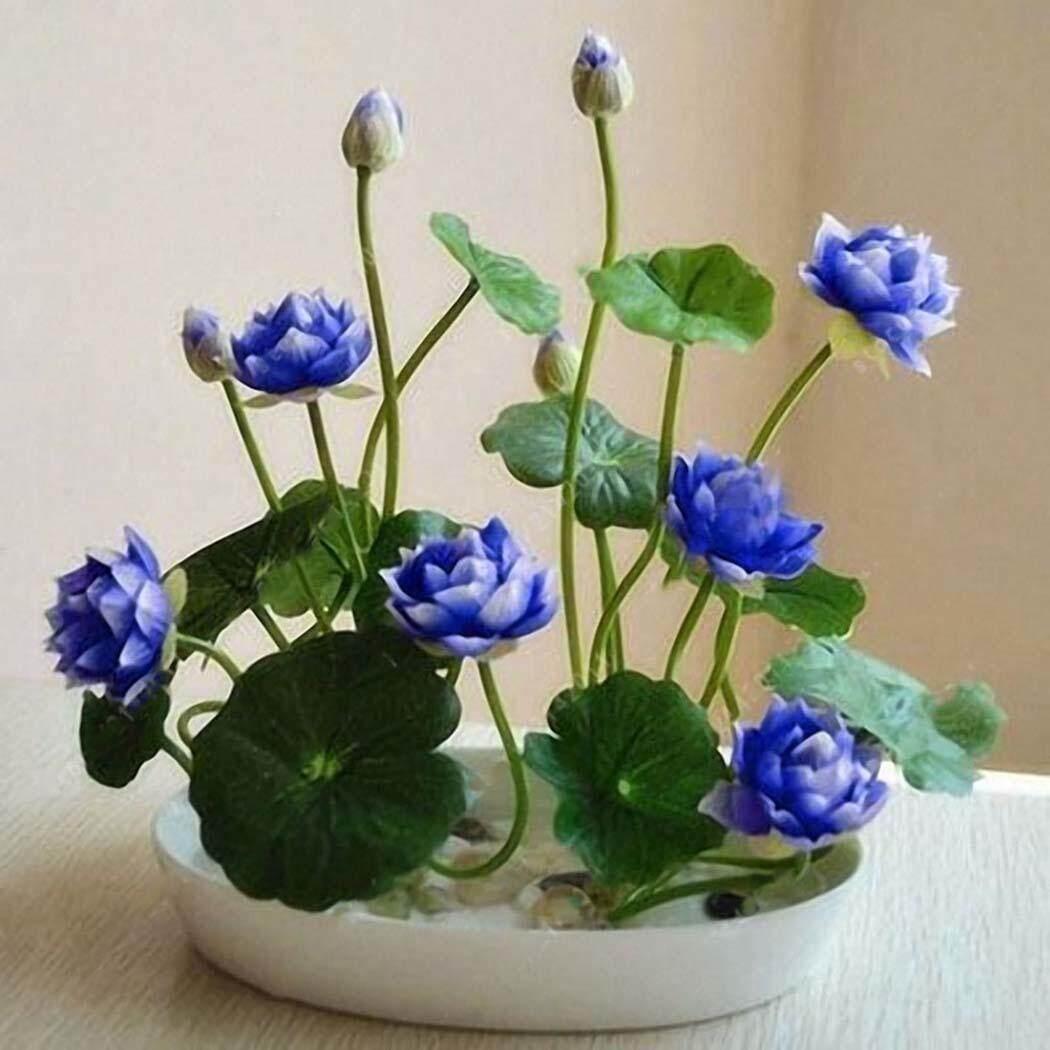 Phổ Biến Nhất Mới Đẹp Đáng Yêu Hoa Thơm Nở Hoa Nhiều Màu Sắc Hoa Sen Vi Trùng